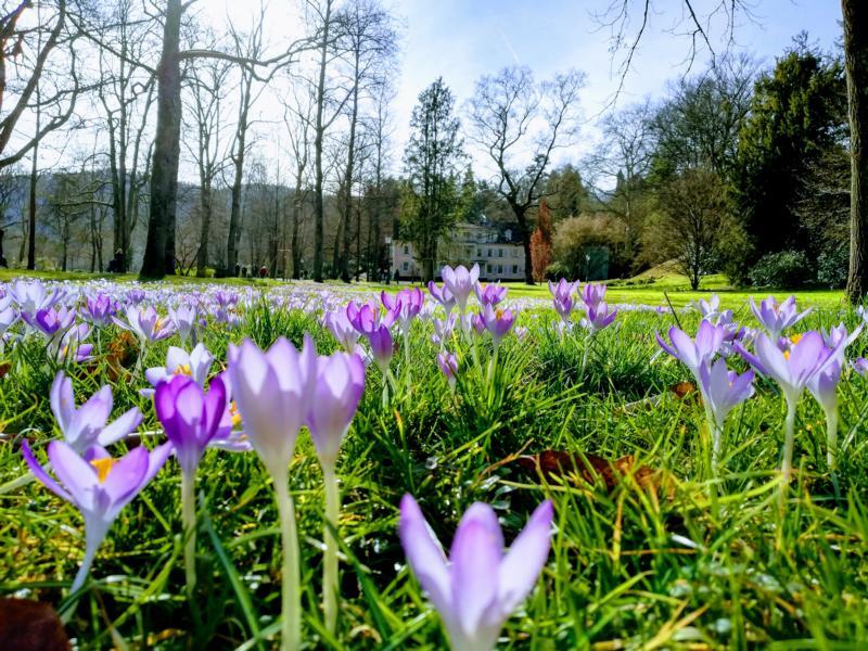 Frühling – Wandlungsphase Holz