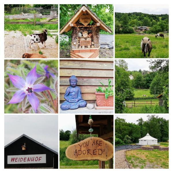 Die äußere und innere Natur erleben auf dem Weidenhof